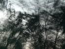 Fluss, Birken, Digitale kunst, Zyklus