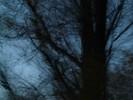 Baum, Dunkel, Stamm, Zweiggespinst