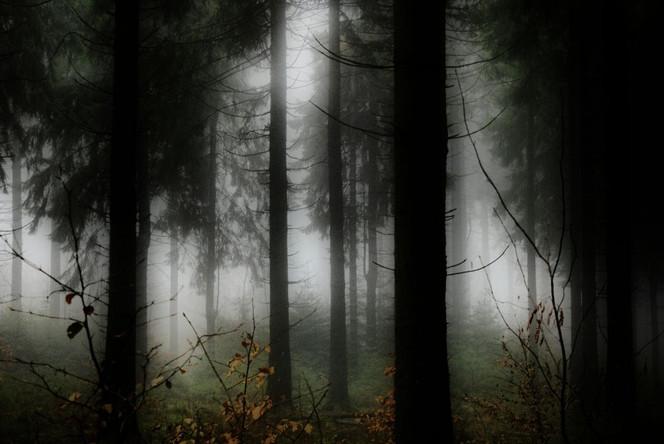 Nebel, Wald, Zauber, Baum, Mystik, Fotografie