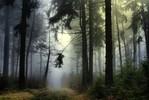 Wald, Baum, Zauber, Nebel