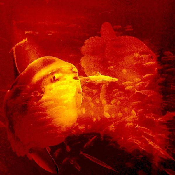 Hai, Zwei mondfische, Fische, Digitale kunst, Sagen, Mond