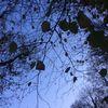 Himmel, Blätter, Fotografie,