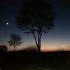 Nacht, Mond, Baum, Fotografie