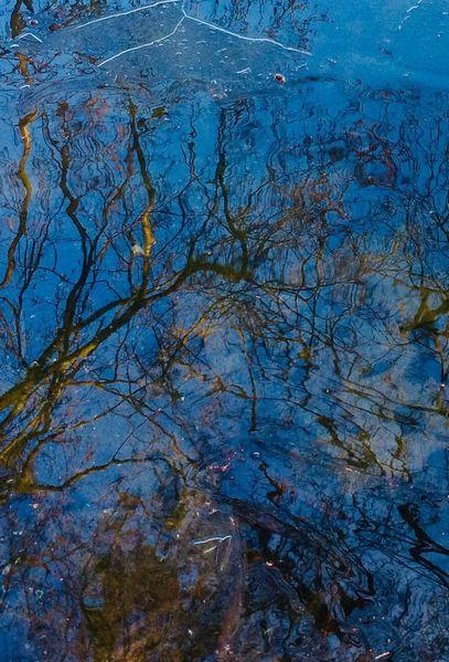 Wasser, Baum, Spiegel, Zweig, Äste, Fotografie