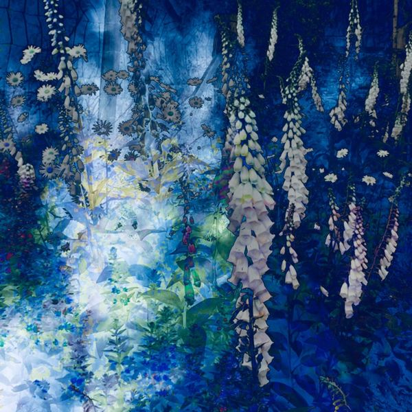 Blüte, Schweben, Blau, Licht, Mischtechnik, Sommer