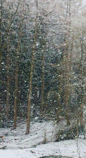 Baum, Wald, Ausschnitt, Fotografie,
