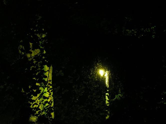 Nacht, Park, Laterne, Baum, Fotografie