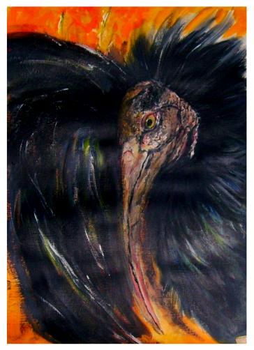 Aussterben, Selten, Waldrapp, Vogel, Malerei, Figural
