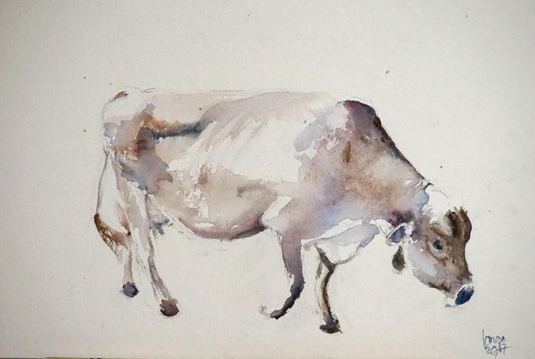 Tiroler grauvieh, Kuh, Rind, Aquarell