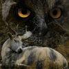 Wesen, Augen, Wild, Fotografie