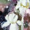 Aquarellmalerei, Pflanzen, Schicht, Aquarell