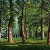Landschaft, Eichen, Ölmalerei, Wald