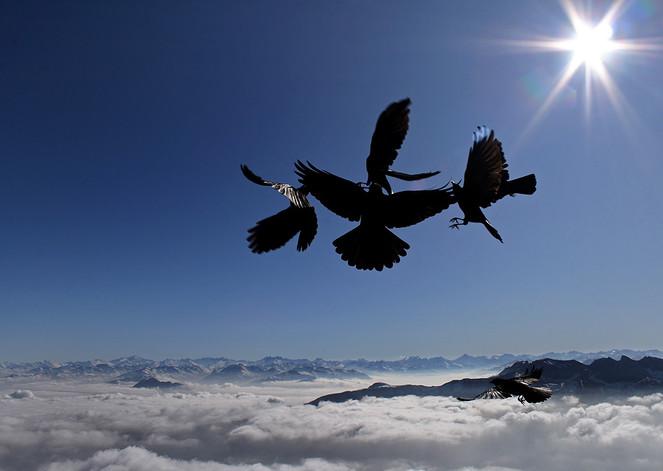 Fliegen, Reigentanz, Dohle, Wolken, Fotografie