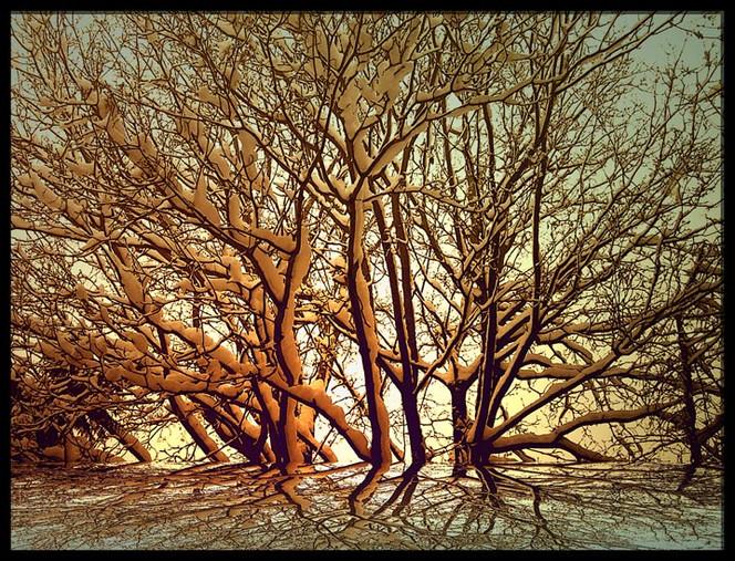 Astwerk, Baum, Natur, Abstrakt, Äste, Digital