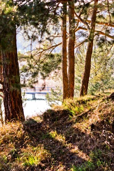 Wald, Fotografie, Natur