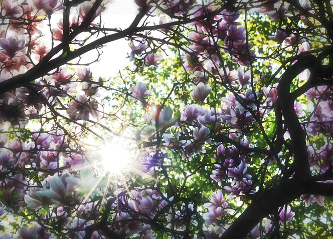 Blüte, Baum, Frühling, Sonne, Fotografie