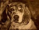 Beagle, Lasurtechnik, Skizze, Weißhöhung