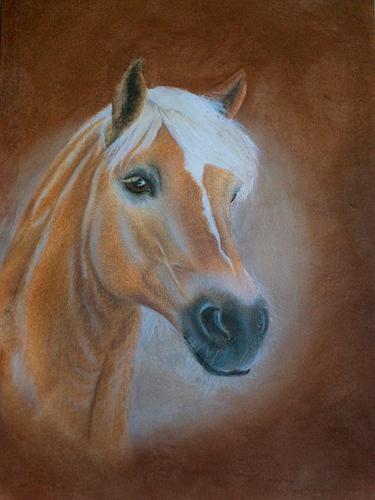 Pferde, Haflinger, Pony, Stute, Zeichnungen, Tiere