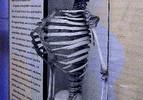 Rippen, Tod, Gerippe, Knochen