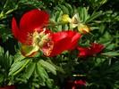 Pflanzen, Vergänglichkeit, Fotografie, Blumen