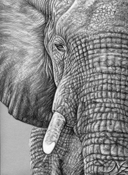 Tiere, Zeichnung, Dickhäuter, Elefant, Grau, Portrait