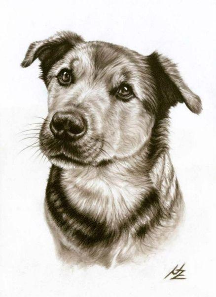 Portrait, Hund, Kohlezeichnung, Realismus, Zeichnung, Hundeblick