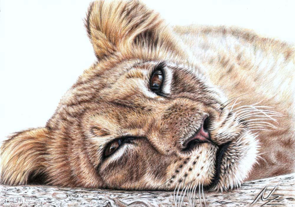 Kunstnet werke zeichnungen tiere löwenkind