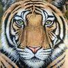 Tiere, Tiger, Großkatze, Tiermalerei