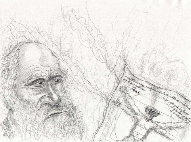 Menschen, Portrait, Evolution, Nonsens, Zeichnung, Cartoon