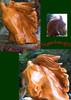 Pferdekopf, Hengst, Kettensäge