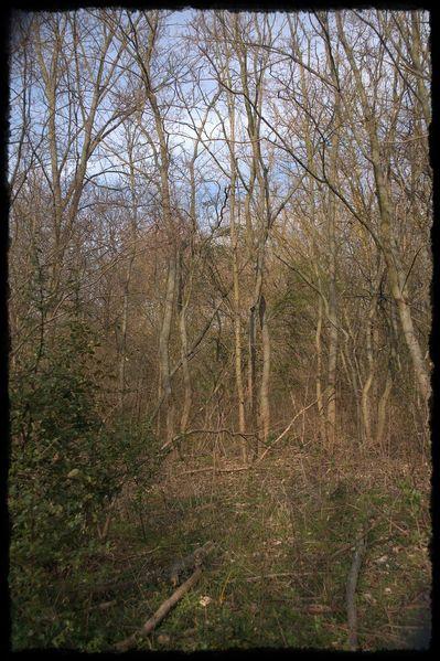 Stille, Wald, Natur, Himmel, Gefühl, Farben