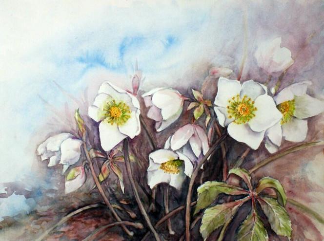 Christrosen, Blumen, Aquarell, Pflanzen