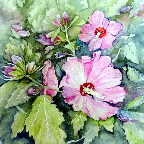 Blütenstrauch, Eibisch, Garteneibisch, Aquarell, Aquarelle blumen