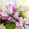 Frühling, Blüte, Apfelblüten, Baumblüte