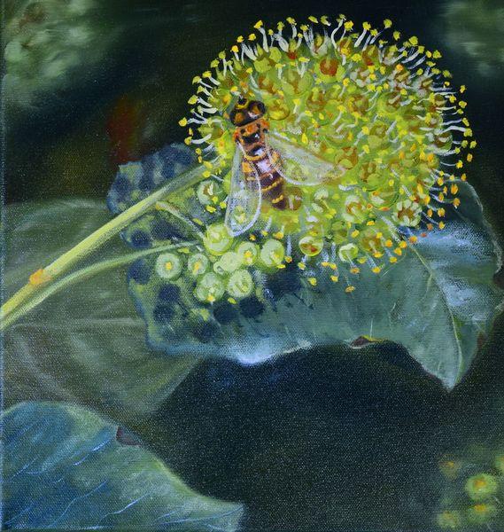 Insekten, Tiere, Herbst, Efeu, Blüte, Wald