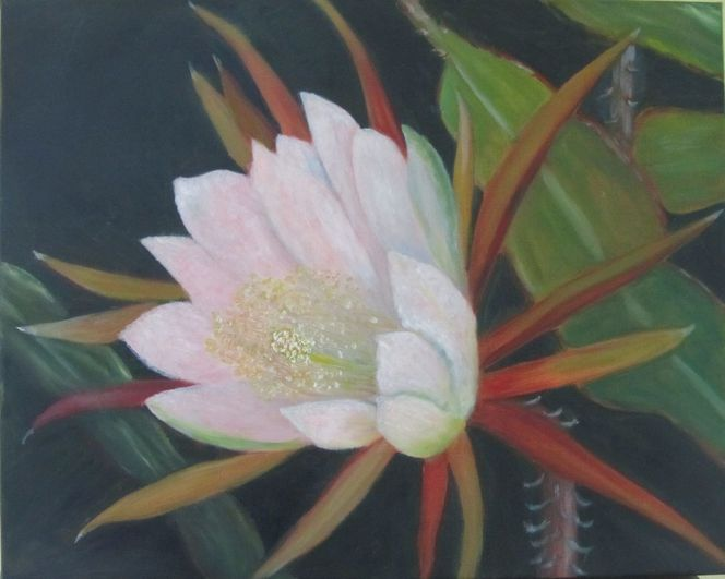 Kaktus, Ölmalerei, Blumen, Blüte, Sommer, Pflanzen