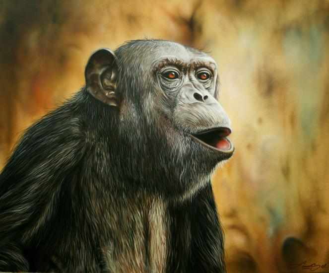 Schimpanse, Affe, Malerei, Tiere