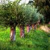 Baum, Natur, Landschaft, Malerei