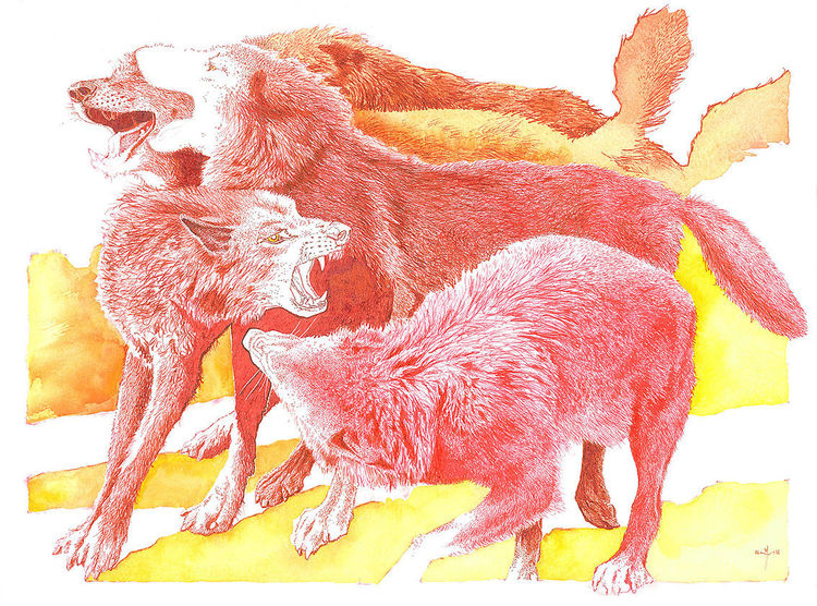 Wolf, Rot, Canis lupus, Illustrationen