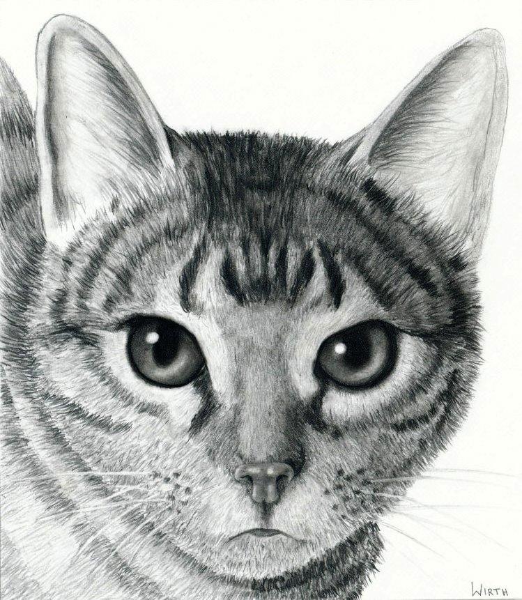 Kunstnet works drawings animals katze