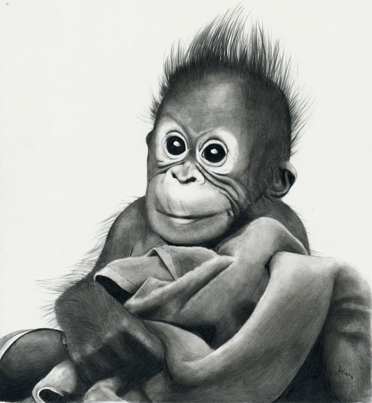 Äffchen, Baby, Orang Utan, Affe Von Nico Wirth