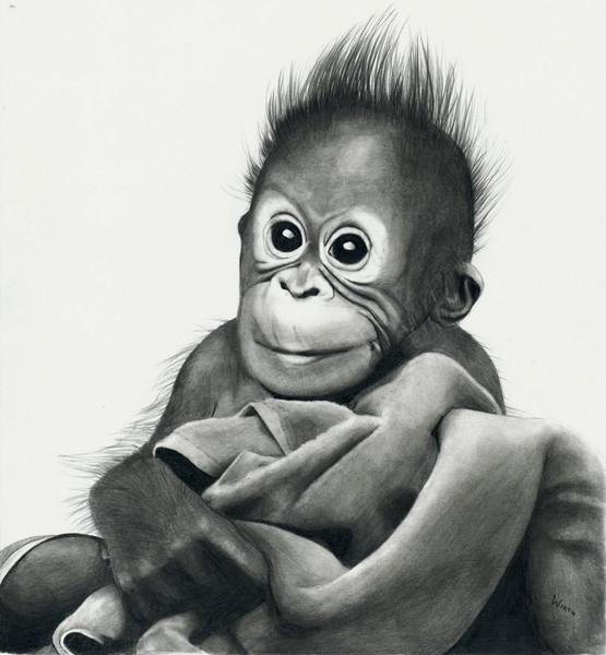Orang utan, Äffchen, Baby, Affe, Zeichnungen, Tiere