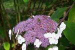 Farben, Blumen, Fotografie, Biene