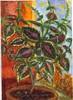 Buntnessel, Coleus, Blumei, Pflanzen