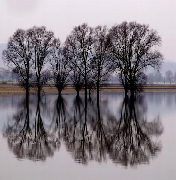 Fotografie, Spiegelung, Baum, Hochwasser