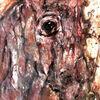 Pferde, Apokalypse, Fahl, Augen