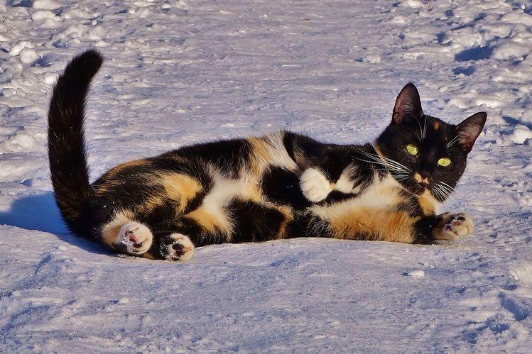 Winter, Pause, Katze, Fotografie