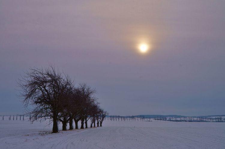 Schnee, Baum, Sonne, Fotografie, Winter