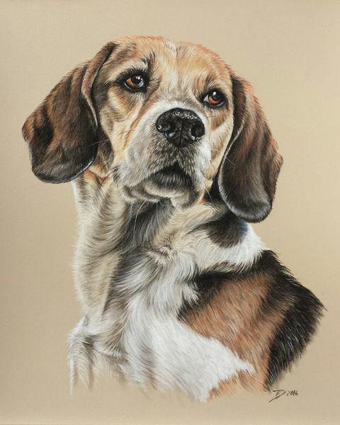 Hund, Beagle, Zeichnungen