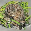 Tiger, Gras, Katze, Garten